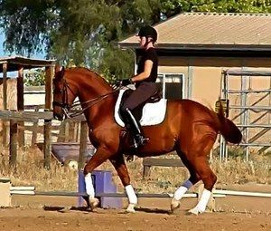Lovely FEI dressage mare for sale shown 4th level