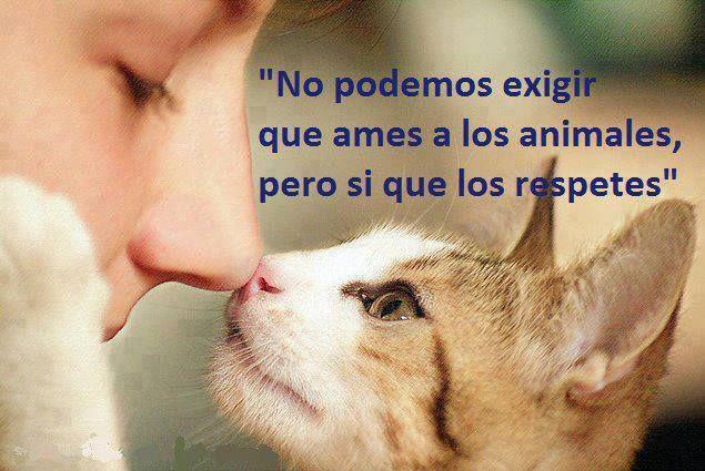 Respeto es fundamental en todas las áreas. Si no Amas...respetar es obligatorio :)