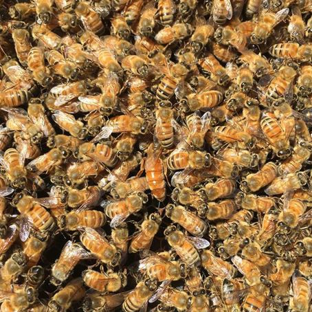 Love this close up shot that Doug, our operations manager took of his bees!  Can you spot the Queen Bee? Doug is recently taken up bee keeping in his spare time, so it's great to get these amazing behind the scene shots! http://www.nzhealthfood.com/vitamins-minerals-su…/honey.html