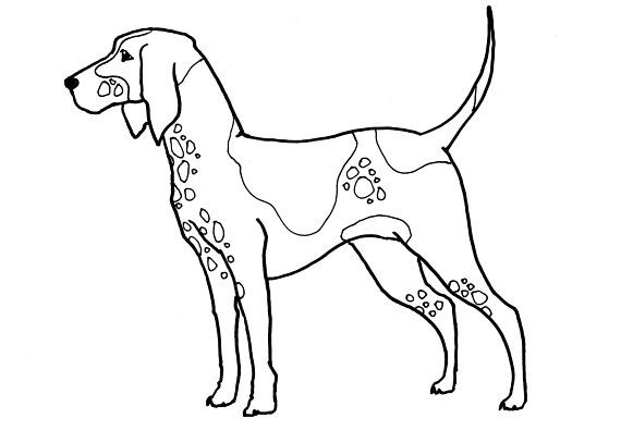 Printable Download Foxhound Coloring Page 5x7 And 8 5x11 Coloringpages Instantdownload Printable Animal Line Drawings The Fox And The Hound Coloring Pages