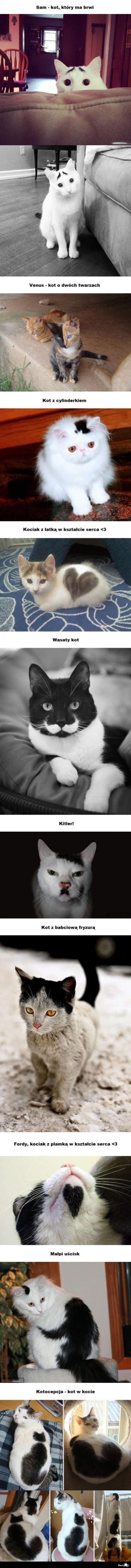 Wonderful <33 #cats #pets