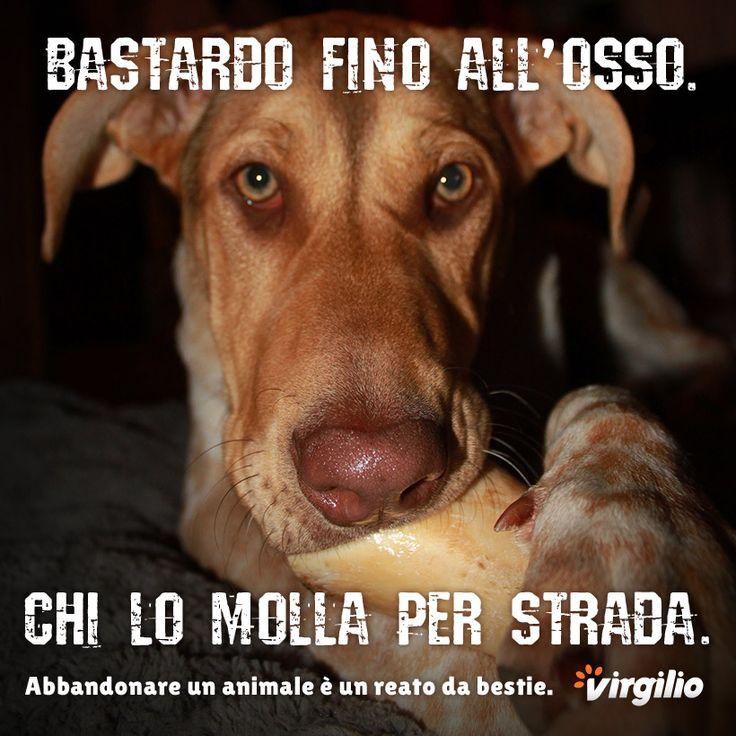 Campagna 2014 contro l'abbandono degli animali. Realizzata per Virgilio.it ha come protagonista un cane e utilizza un claim decisamente diretto