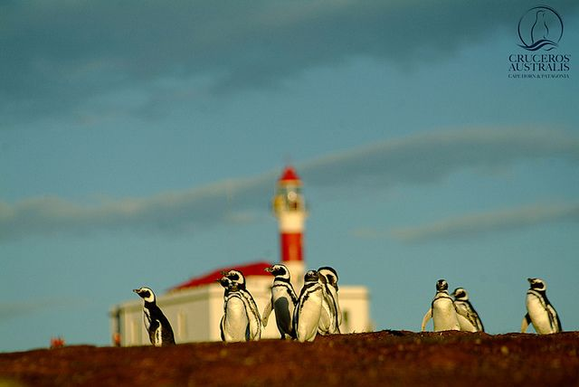 The penguins that live on Cape Horn give warm greetings to visitors.