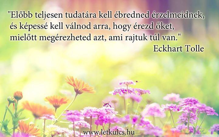 Eckhart Tolle gondolata az érzelmekről. A kép forrása: A Létezés Kulcsa