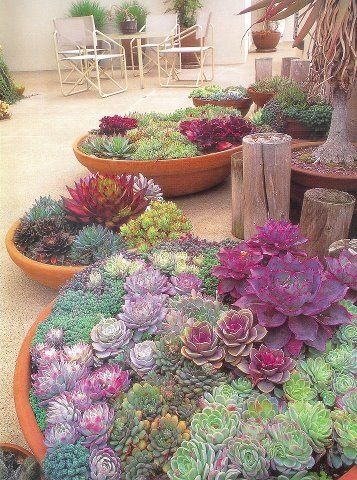 Seriously beautiful and maybe more drought tolerant than other choices. Succulents do well in containers.