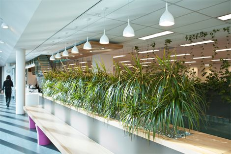 Open Plan Offices - indoor plants displays from Ambius