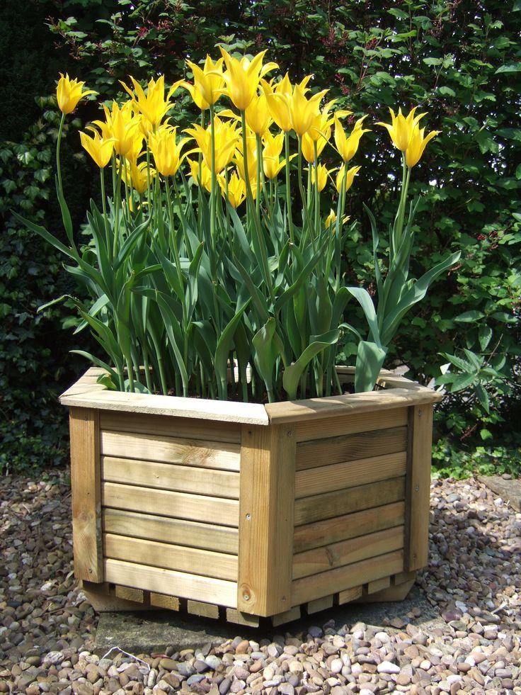Hexagonal wooden planter - ideal for bulbs