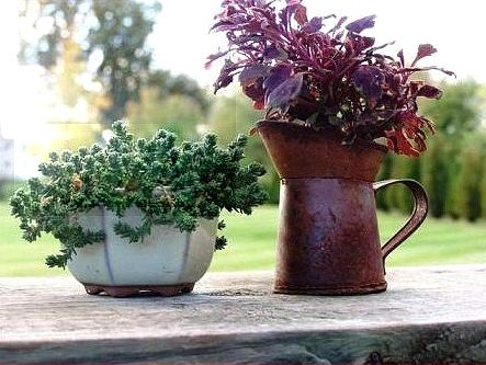 124 best container gardens images on Pinterest Pots, Container - container garden design ideas