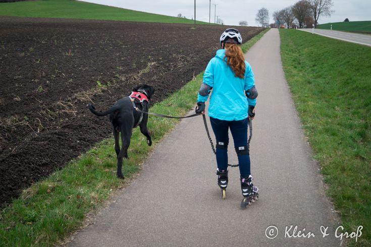 Inlinerfahren Mit Hund With Images Freya
