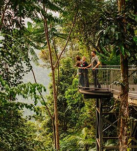 Mamu Tropical Rainforest skyalk, Wooroonoon National Park just 15 minutes out of Innisfail, Queensland