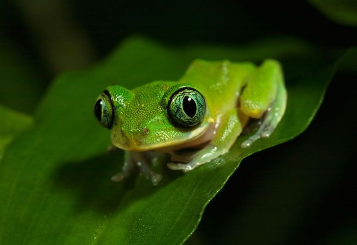 Top 30 National Geographic Frog Pictures Of All Time