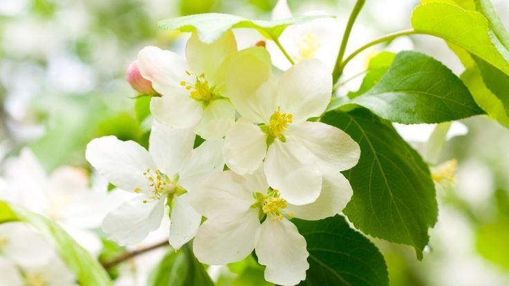 Ağaç dalındaki güzel çiçekler