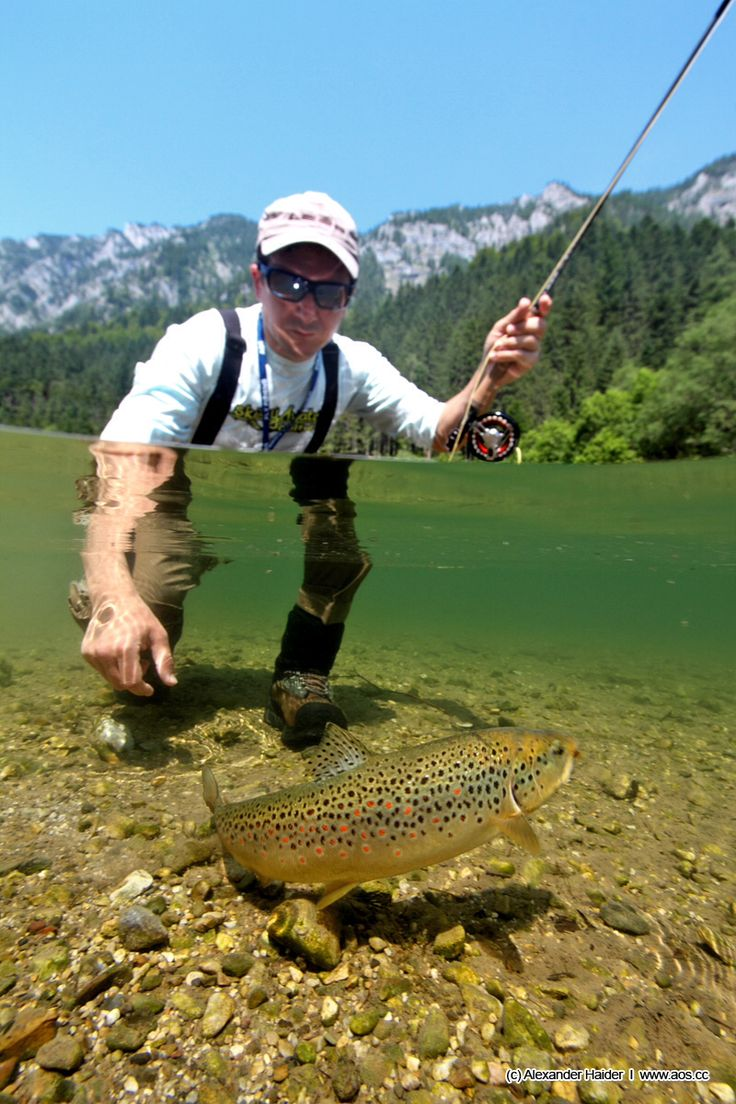 Brown Trout #fishbox...(M McKenzie)For cash back at Bass Pro Shops and other camping supplies stores visit http://www.dubli.com/M04VB