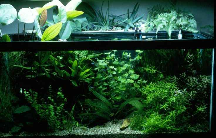 64 Best Images About Aqua On Pinterest Underwater