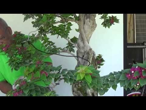 Bonsai Tutorials for Beginners: How to Wire a Pre Bonsai Material Part 1  - YouTube
