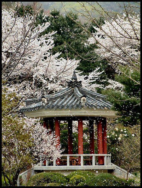 Korea - in the spring -spent many days in Seoul