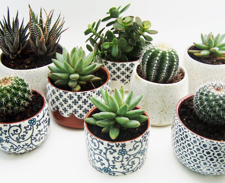 How amazing are succulents?! And I always love how a cactus looks. Cute pots (: