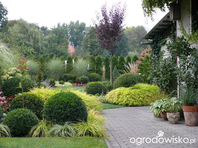 Ogród mały, ale pojemny;) - strona 143 - Forum ogrodnicze - Ogrodowisko