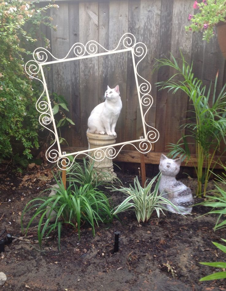 My living changeable feline garden statue. Frame and pillar both rescued from landfill and re-purposed. Burmilla model.