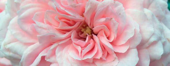 http://www.erbolario.com/linee/110_3_rosa Rosa