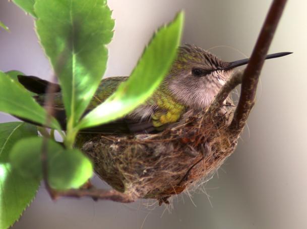 In rare event, hummingbird lays egg at Franklin Park Zoo - The Boston Globe