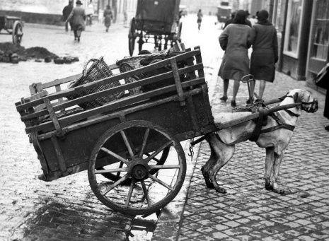 The Netherlands | Hondenkar, Maastricht ca. 1932