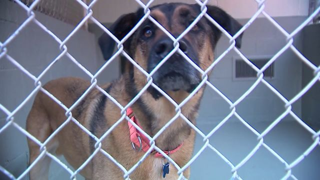 From Friday through Monday, pet adoptions are free at the Humane Society.