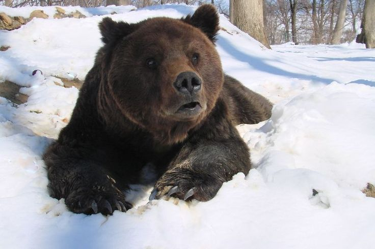 Since 2005, World Animal Protection has supported Asociatia Milioane de Prieteni (AMP) in creating the world's largest bear sanctuary. Located in Romania, the