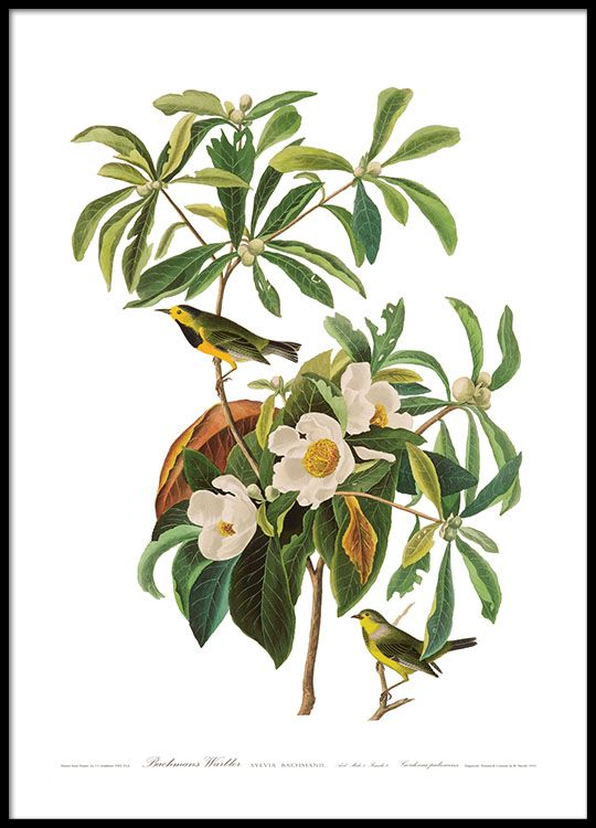 Poster with birds on a branch and green leaves.