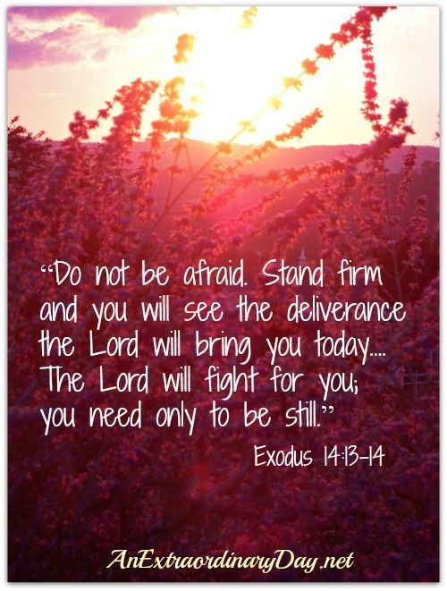 Awesome verse! No fear, be still, He will fight for you. Exodus 14:13-14. | See more about the lord, scriptures and scripture verses.