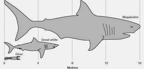 Patcnews: The Patriot Conservative News Tea Party Network © All Copyrights Reserved : ( Prehistoric Megalodon Shark ) Patcnews: Aug 6, 2013 The Patriot Conservative News Tea Party Network Reports Prehistoric Megalodon Shark © All copyrights reserved By Patcnews