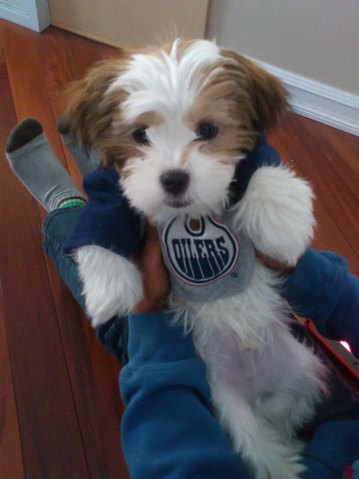 Our newest Oilers #1 fan ready for the game tonight! - Kinjal Manek
