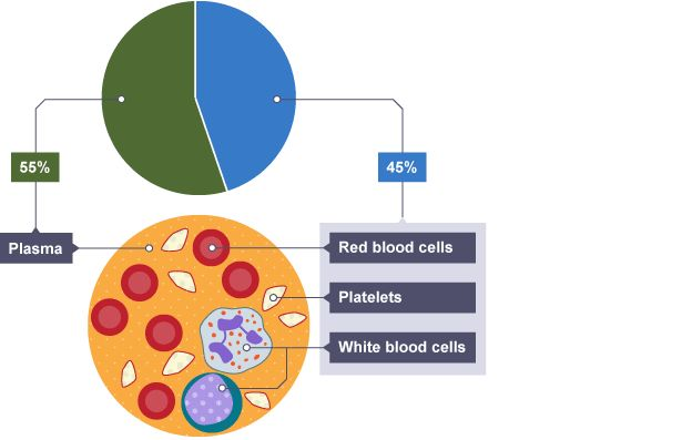 30 best biology revision images on pinterest biology revision pie chart showing blood composition is plasma and is red blood cells white blood cells and platelets that float within the plasma ccuart Image collections
