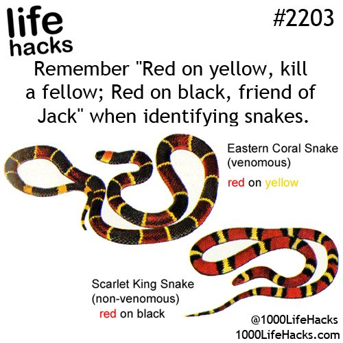 I'm terrified of snakes
