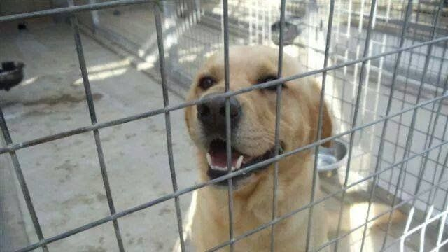 Petition Rspca Stop The Sale Of Animals In Pet Shops Queensland Change Org Pet Shop Animals Pets
