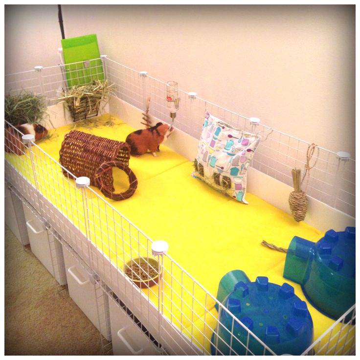 1000 images about hamster cages 2 have on pinterest for Making a c c cage