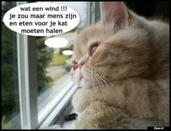 wat een wind