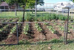 When to plant a vegetable garden in Texas.....   While it is not a rule of thumb, Texans know that planting rows in an East-West direction is more productive than a north-south direction.