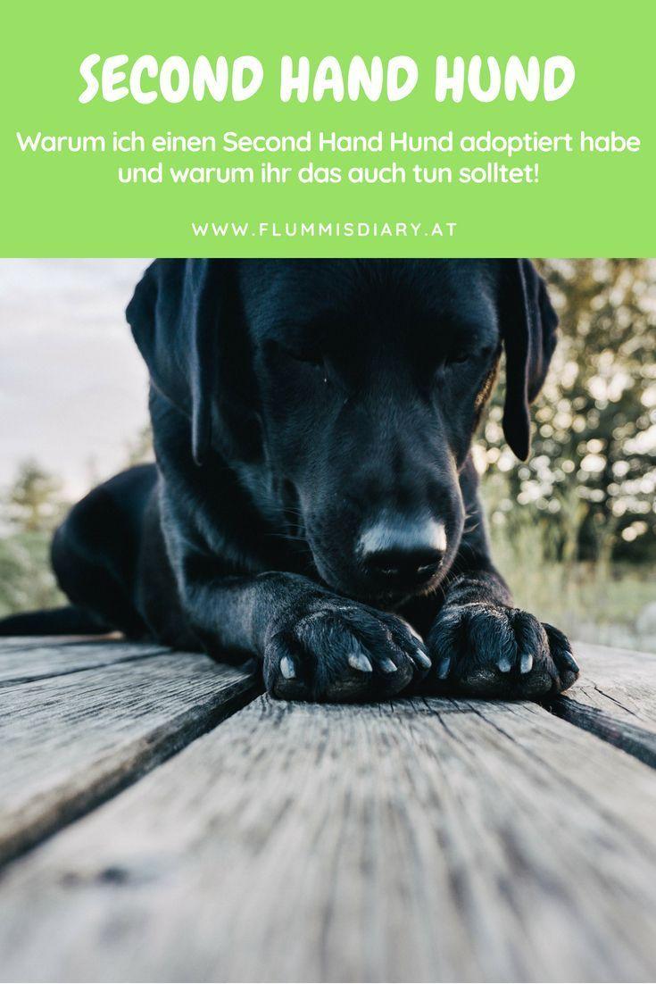 Ja Zum Second Hand Hund Warum Ihr Hunden Eine 2 Chance Geben Solltet Hund Adoptieren Hunde Und Tierheim Hunde