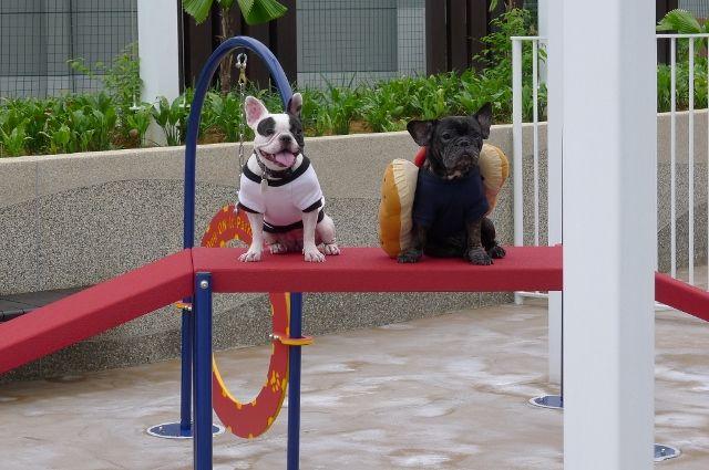 Mall Dog Friendly