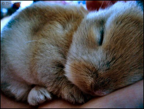 Good Morning Every Bun Could You Wake A Little Bunny Like This #Cute