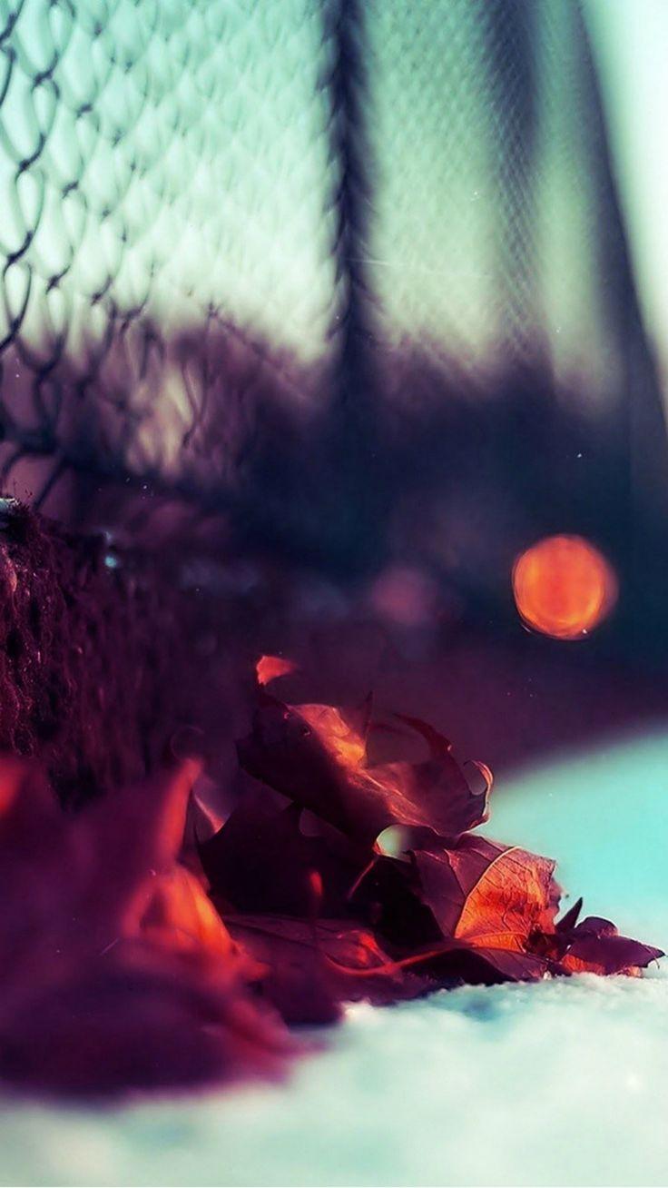 Beautiful Redwood Leaves Closeup iPhone 6 wallpaper