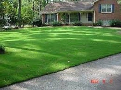 1 Lb JACKPOT HULLED BERMUDA GRASS SEED, For Lawns, Pastures, Hay, Golf Courses