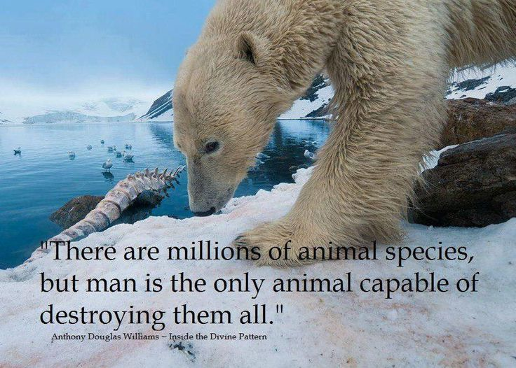"""""""There Are Millions Of Animals Species, But Man Is The Only Animal Capable Of Destroying Them All."""""""