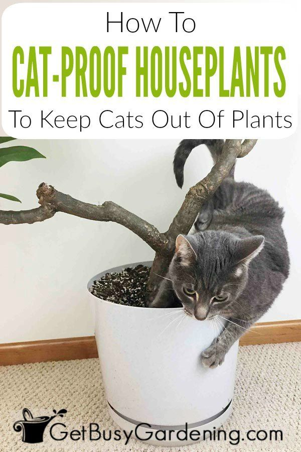 How To Keep Cats Out Of Houseplants Cat Plants Plants Houseplants