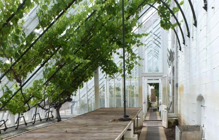 : Beauty Greenhouses, Future House, Greenhouses Kitchens, Kitchens Gardens, Green House, House Idea, Greenhouses Conservatory, Glasses House, Gardens Gardenista