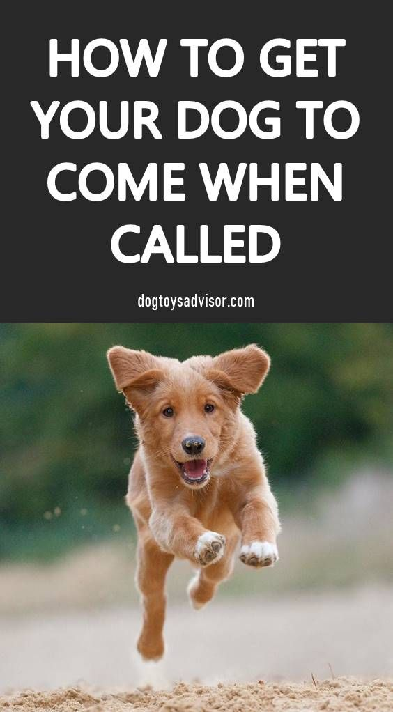 Find Out Why Your Dog Won T Come When Called Plus Check Out