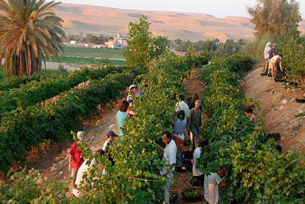 Desierto florece en Israel de acuerdo con profecía bíblica