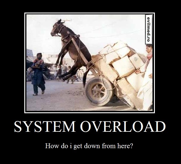 funny, motivational,epic,silly,pic, Market ,research, donkey, hanging, fail,photography,comedy,humor,laughter,entertainment,lol,OMGWTF