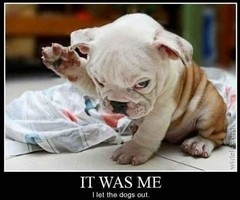 I let the dawgs out.: Bulldogs Puppies, Funny Dogs, So Cute, English Bulldogs, Pets, Funny Stuff, Things, Dr. Who, Animal